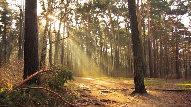 bosques-mexico.jpg