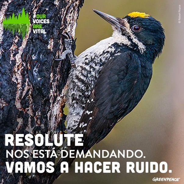 RESO.jpg