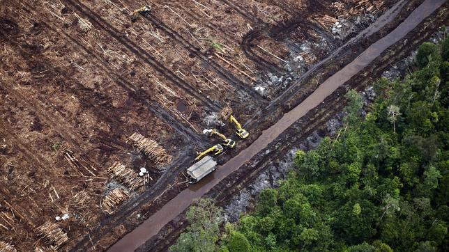greenpeace-deforestacion-indonesia--644x362.jpg