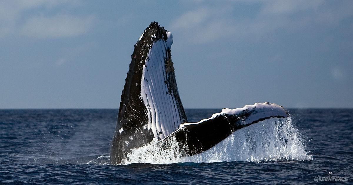 Canto de las ballenas