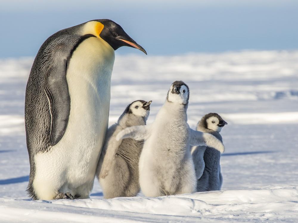 blog-dia-del-padre-pinguinos.jpg